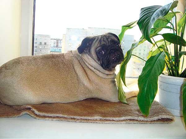 Самые забавные собаки Сургута