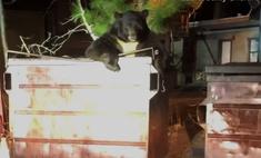 Медведь застрял в мусорном баке и позвал на помощь полицейских (видео)