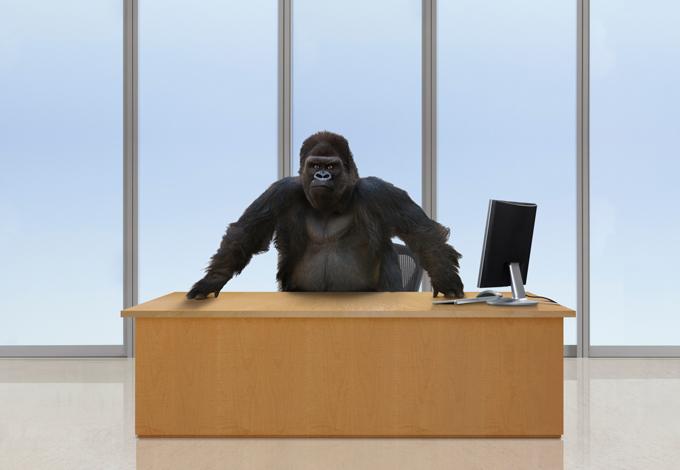 Горилла за рабочим столом