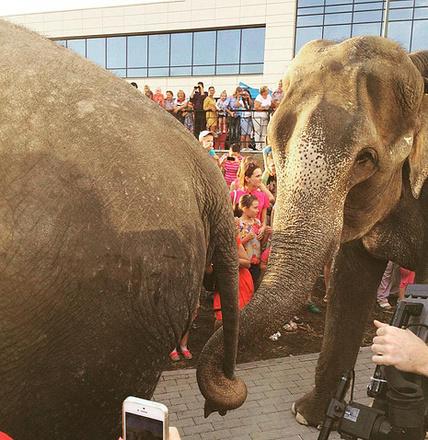Индийские слоны искупались в Нижнем Тагиле, фото