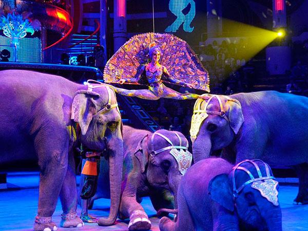 шоу слонов династии Корниловых