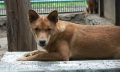 Власти Санкт-Петербурга разрешили усыплять бездомных животных