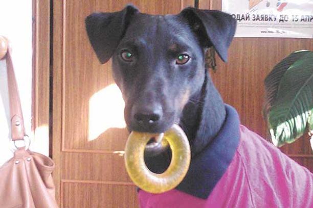 Собаки, модная одежда для животных