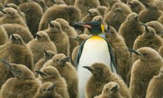 ученые всерьез задумались пингвины инопланетянами