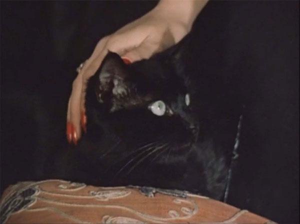 Черная кошка из «Место встречи изменить нельзя»