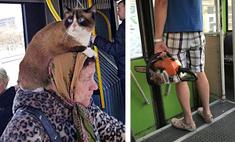 странные забавные вещи творятся общественном транспорте литвы фото