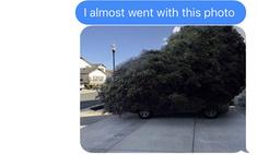 Муж поехал покупать елку и потроллил жену фотографиями