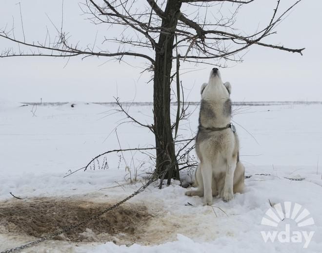 фотосессия с собаками