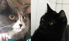 Мяу-звезды: 7 самых известных котов Перми