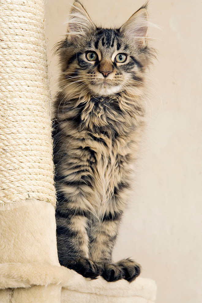 Кошка своими руками новгород
