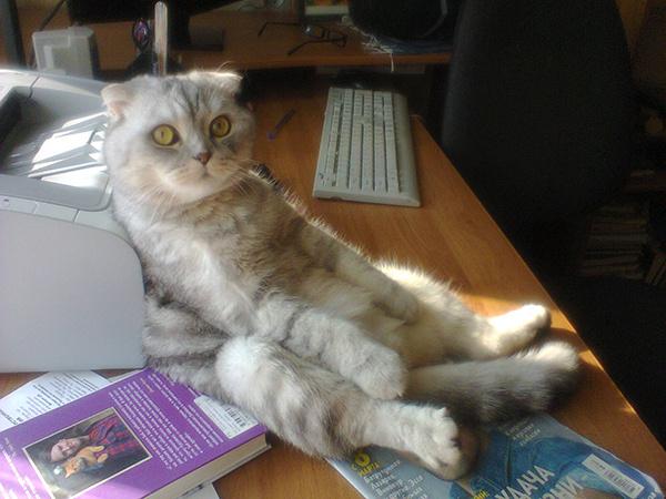 коты и кошки Самары конкурс