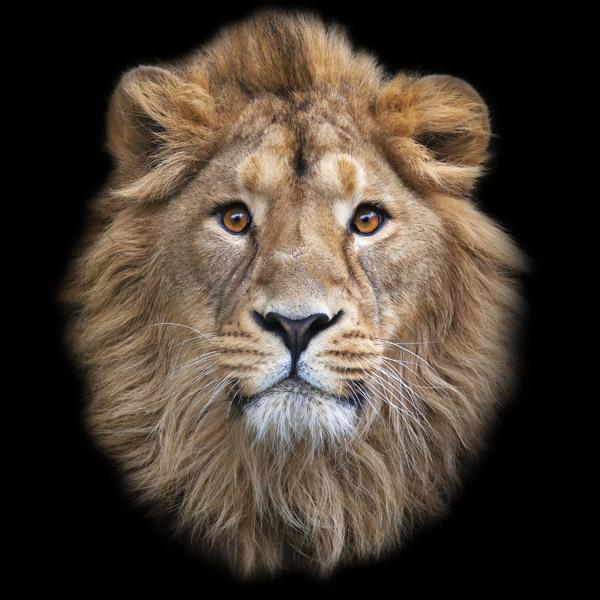 гороскоп: лев