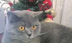 Самые милые новогодние коты Красноярска