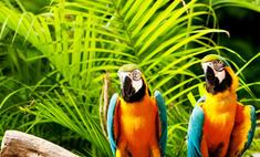 Попугай — любимец или раздражитель? Тест на совместимость