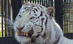 Красноярский зоопарк «Роев ручей»: звери-улыбаки! [фото]