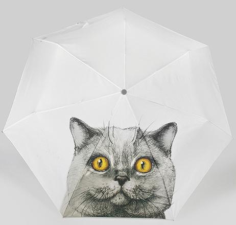 Alessandro Frenza, зонт