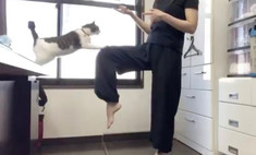 видео котором кот хозяйке показать прием тхэквондо вирусным