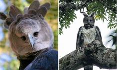 В Интернете обсуждают огромного орла, который выглядит как человек в костюме
