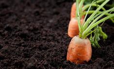 Go green: Быть вегетарианцем во Владивостоке
