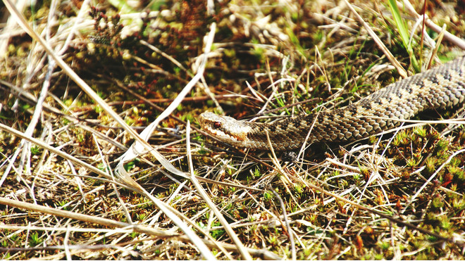 как избавиться от змей в частном доме