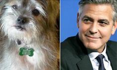Джордж Клуни спас собаку из приюта