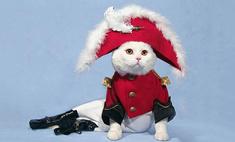 Котики для новогоднего настроения. Выбери самого очаровательного!