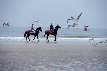 Купание коня в сентябре предпочтительнее купания всадника