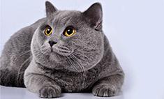 Такие разные кошки: милые фото и видео питомцев