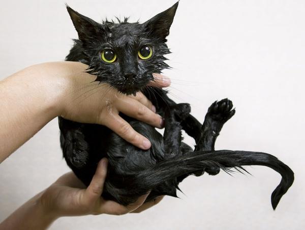 Причины перхоти у котов