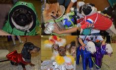Мопс в иллюминаторе: 18 собак в космических костюмах