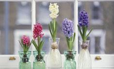 Живые цветы в интерьере: 25 идей для квартиры и дачи