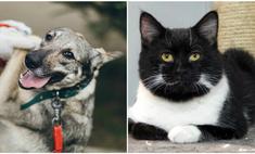 котопёс недели возьми приюта собаку глафиру кота пуаро
