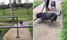 Пес так и не смог пронести палку под турникетом, несмотря на помощь хозяйки (видео)
