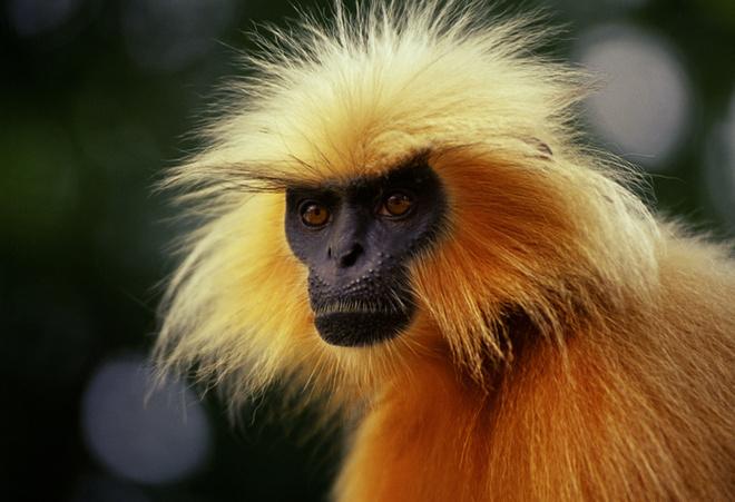 в чем встречать год обезьяны