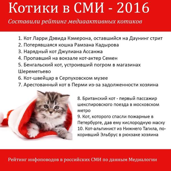 Кот Дэвида Кэмерона— самый популярный вСМИ