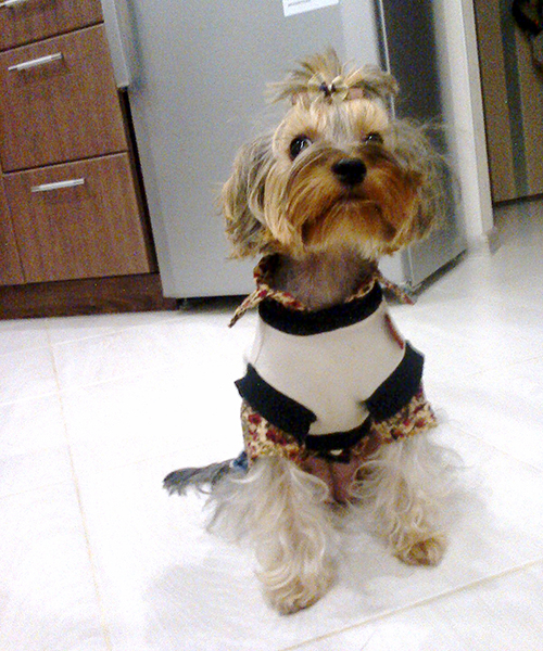 модные собаки