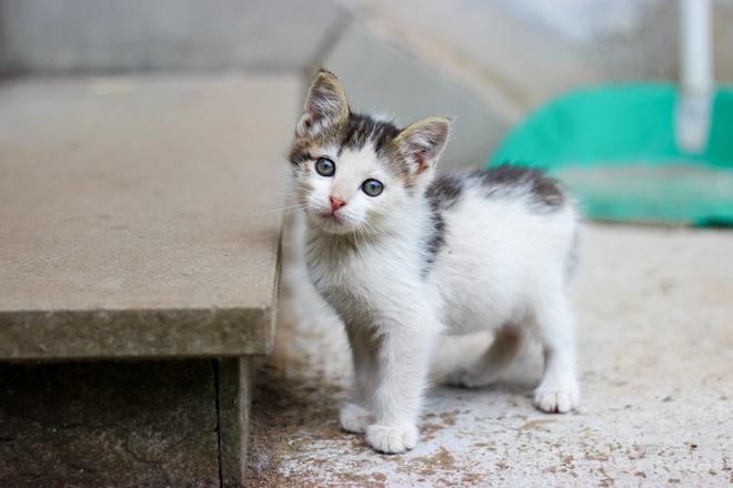 Ученые узнали, почему кошки любят одиночество