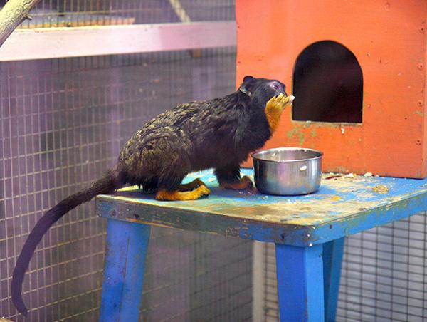 зоопарк в тюмени зоопарк тюмень винзили