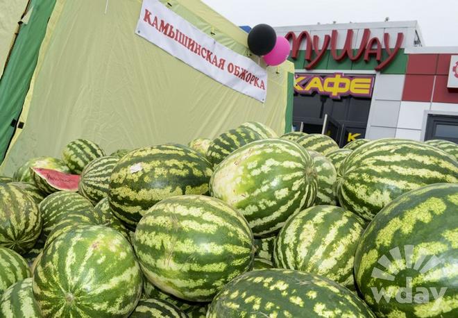 Камышинский арбузный фестиваль Зело отменный плод