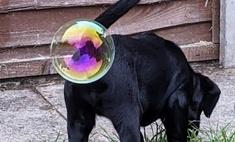 Самые смешные снимки комедийного фотоконкурса домашних животных