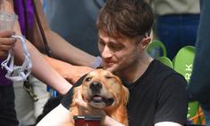 10 собак Дэниела Рэдклиффа