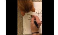 Кошка играет с хозяйкой в крестики-нолики и выигрывает (видео)