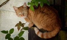 Кот отомстил своему хозяину: смешное видео
