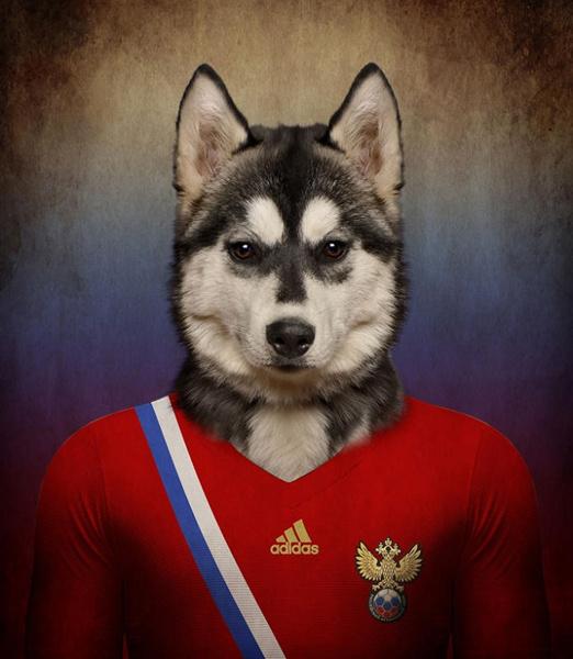 Сибирская собака хаски