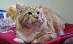 32 самых милых котика Барнаула: голосуй