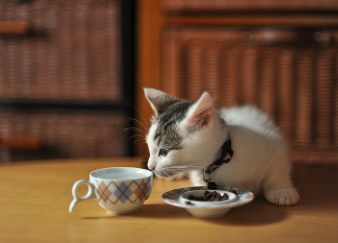 лучшие корма для котят