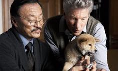 Ученые выяснили, отчего умер пес Хатико
