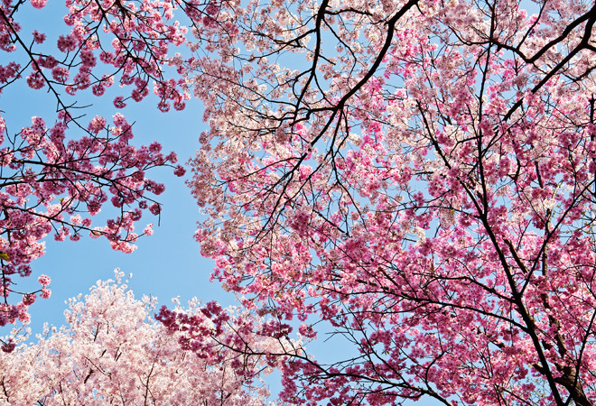 Картинки природа в розовом
