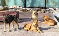 Российские звезды помогли бездомным животным