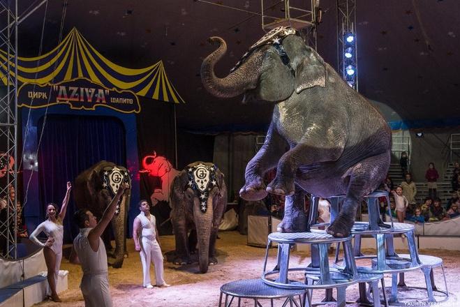 Шоу Слонов Братьев Гертнер в Оренбурге